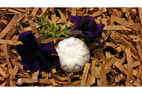 White Miniature Sunflower